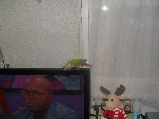 Nu kan hij weer naar zijn eigen tv kijken.